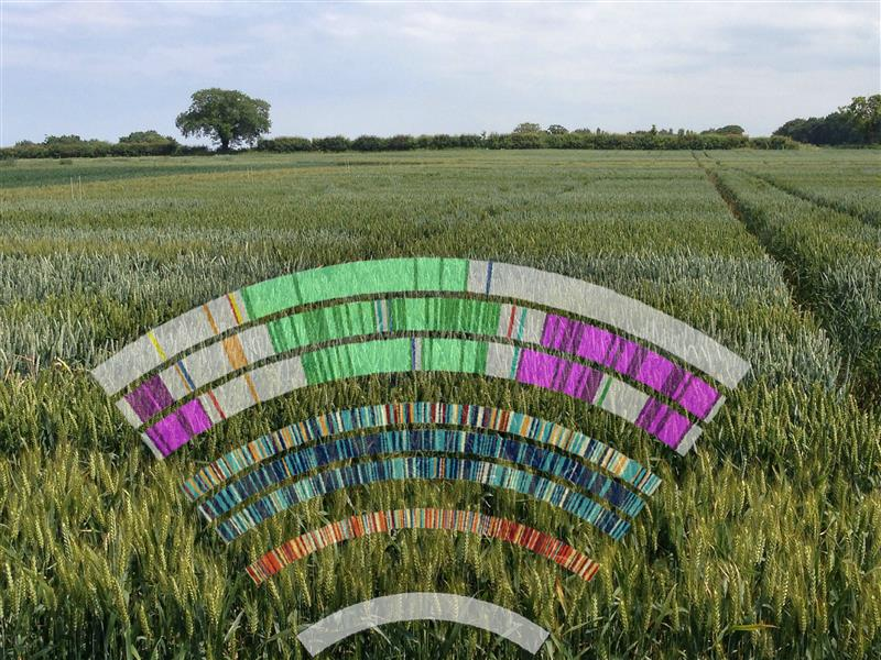 Integrating wheat genomics