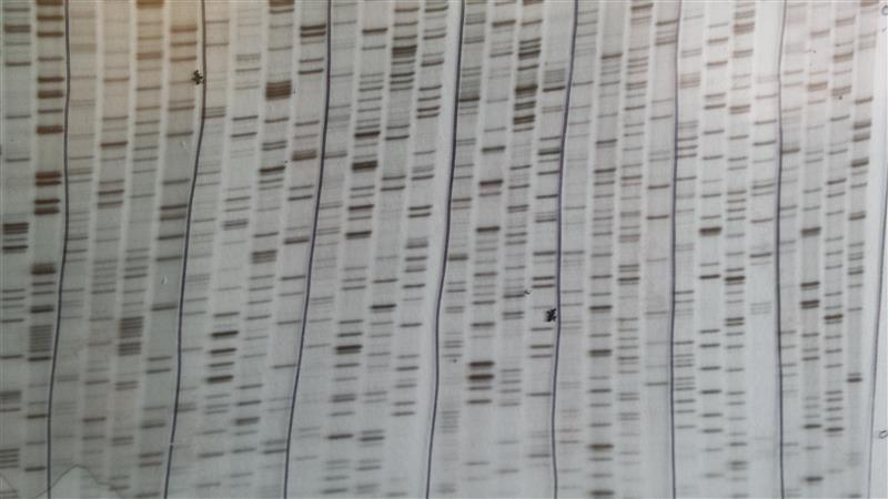 (NRP-167) S35 Sanger sequencing autoradiograph