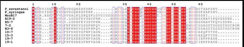 (NRP-237) Sequence alignment of bacterial peptides