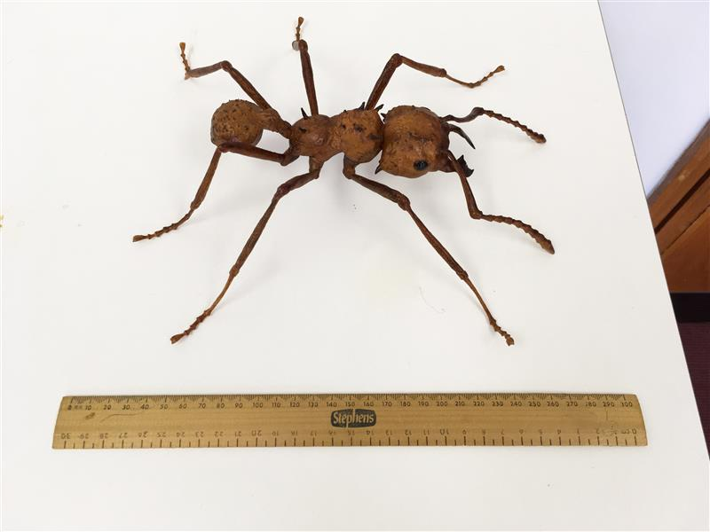 3D leafcutter ant